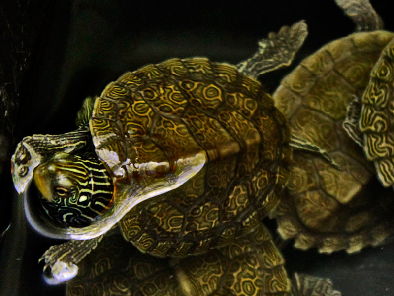 baby-map-turtle