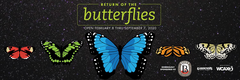 Return-butterflies-slider
