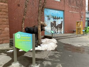 Moose exhibit at ECHO as part of Energy Commons exhibit
