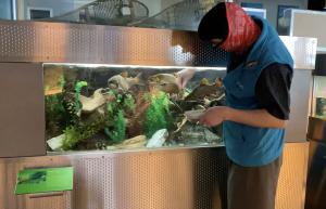 Animal Care staff feeding fish
