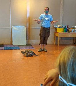 ECHO Educator showing the snapping turtle roaming the floor with campers looking on.