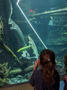 Girl at ECHO looking at animal care feeding sturgeon in a big tank