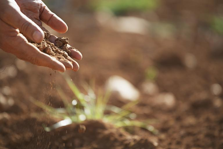 Hands holding dirt above a brightly lit garden