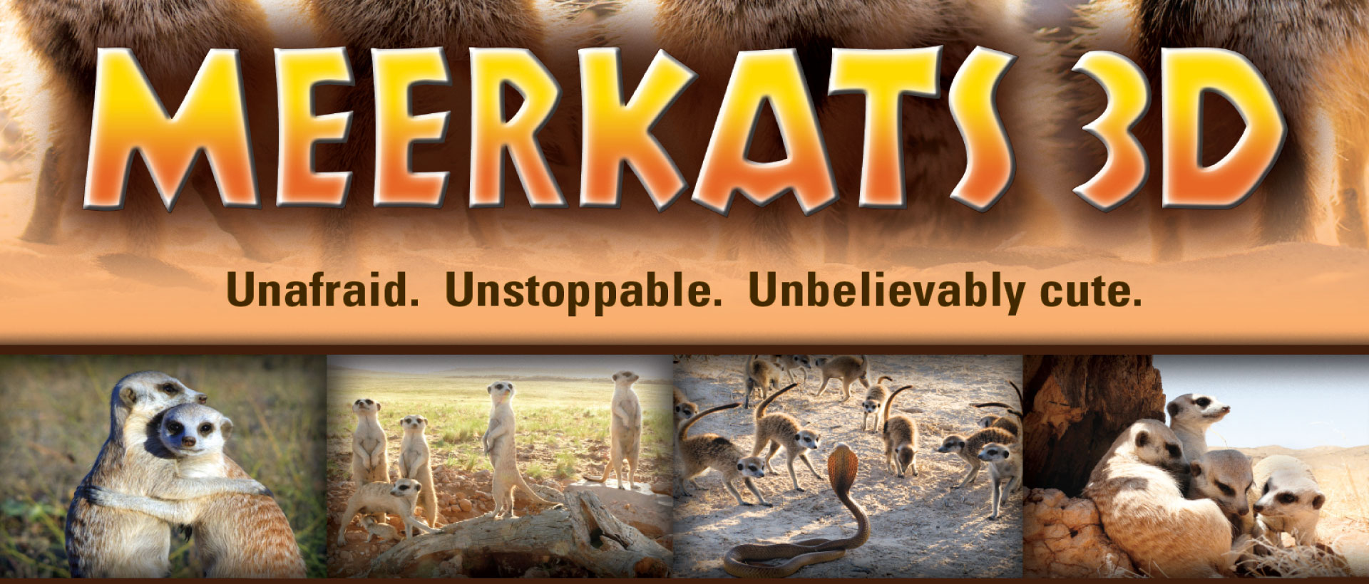 Meerkats 3D image with photos of meerkats hugging each other, in a group family, fighting of a snake